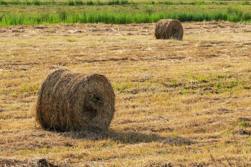 Countryside landscape, view of yellow rolls of hay on mowed field on sunny day. Dry weather in which agricultural work is good royalty free stock photos
