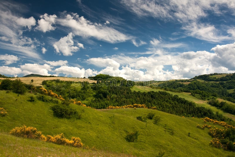 Countryside of le Marche, Italy. Hilly countryside of le Marche, Italy, with brooms royalty free stock image