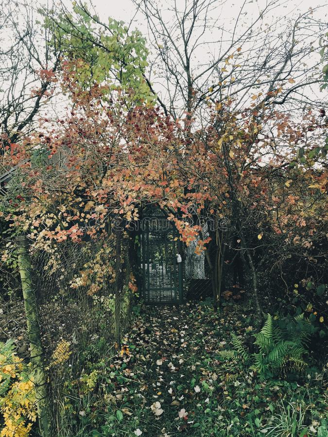 Countryside living. Old fence with autumn leaves, wooden cabin and metal fence, path under beautiful red leaves. Slow life royalty free stock images