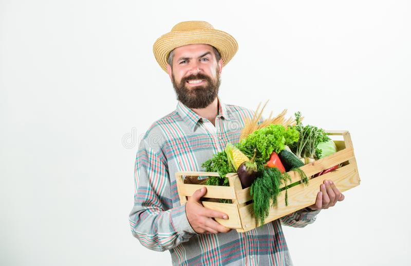 In the countryside. man chef with rich autumn crop. seasonal vitamin food. Useful fruit and vegetable. organic and. Natural food. happy halloween. bearded stock image