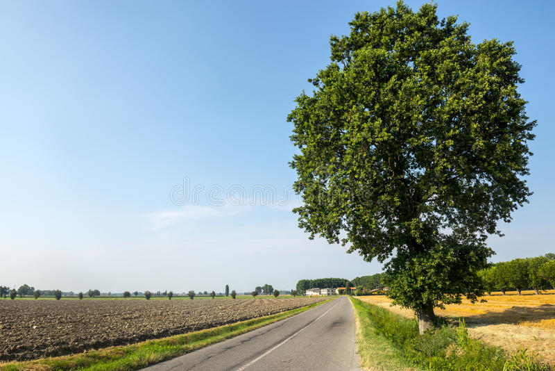 Download Countryside near Pavia stock photo. Image of lombardy - 38195552