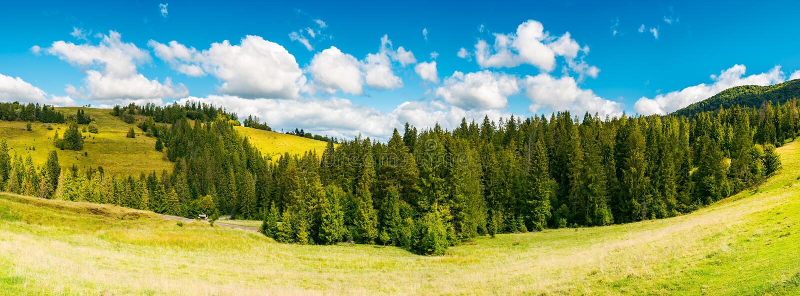 Countryside panorama in early autumn. Lovely landscape with spruce forest on the grassy hill. beautiful cloud formation above the distant ridge. warm and sunny stock images