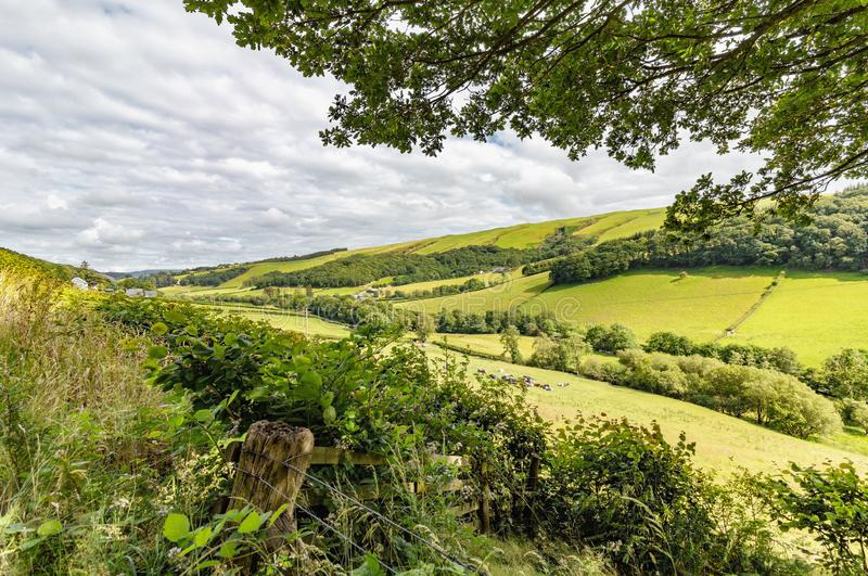 Countryside in Powys, mid Wales in the UK. View of lush fields and trees in summer of 2019 royalty free stock photography