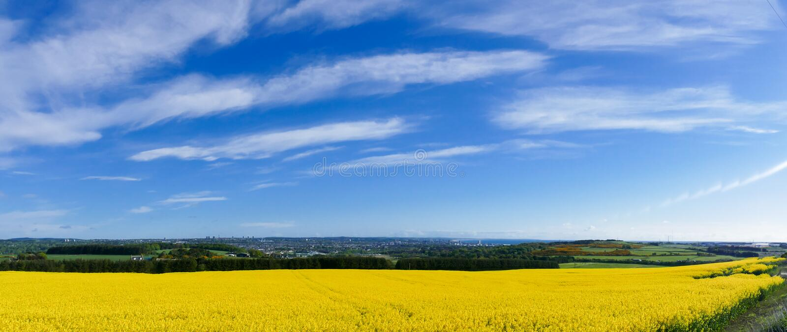 Countryside Rapeseed Flower Field Panorama. With Aberdeen city in the far distance stock images
