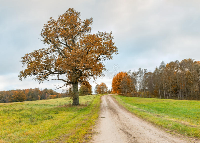 Countryside road with lonely oak tree, Europe royalty free stock image