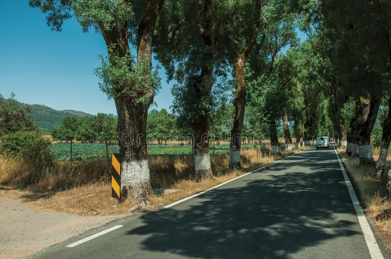 Countryside road shaded by trees alongside. Countryside road through agricultural fields shaded by trees alongside, in a sunny day near Castelo de Vide. Nice royalty free stock photo