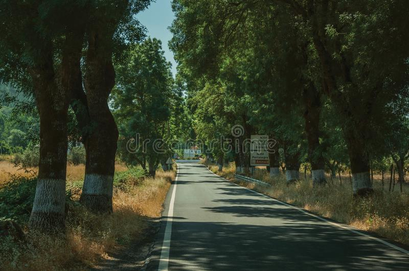 Countryside road shaded by trees alongside. Countryside road through agricultural fields shaded by trees alongside, in a sunny day near Castelo de Vide. Nice royalty free stock photos