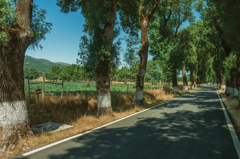 Countryside road shaded by trees alongside. Countryside road through agricultural fields shaded by trees alongside, in a sunny day near Castelo de Vide. Nice royalty free stock images