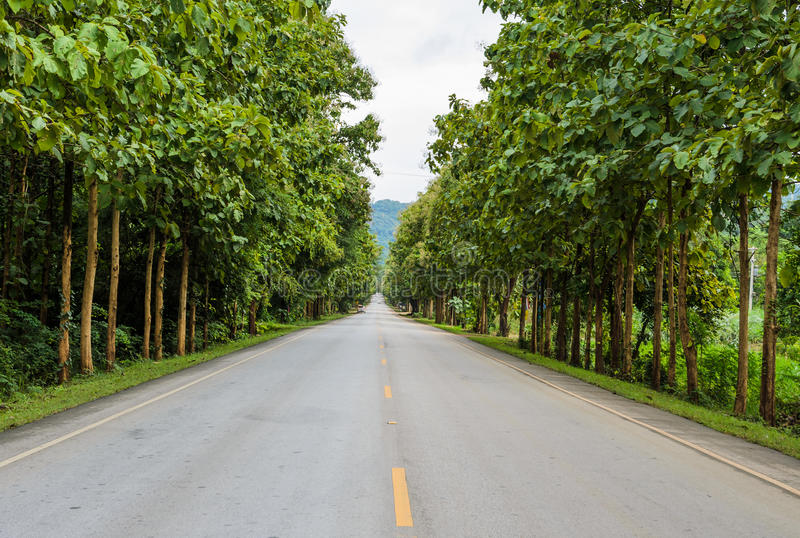 Download Countryside road stock image. Image of nature, road, branch - 34944535