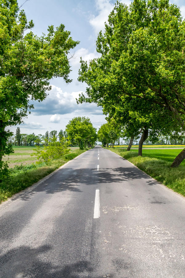 Countryside road between trees stock images
