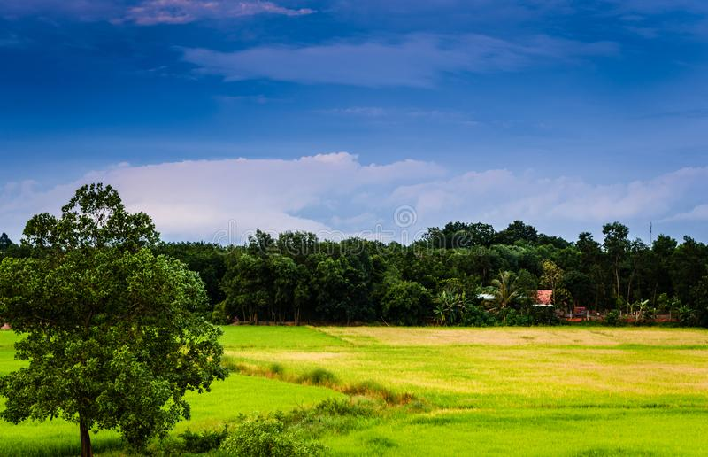 Countryside scene in Vietnam royalty free stock photography