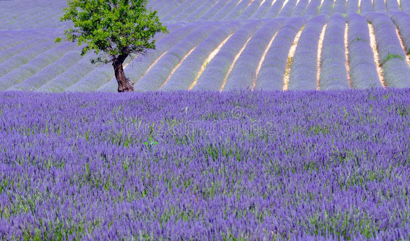 Countryside Scenic In Provence Stock Images