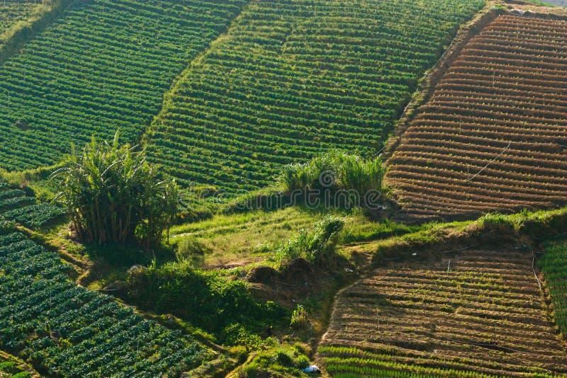 Countryside vegetable field at Kundasang, Sabah, Malaysia, Borneo royalty free stock image