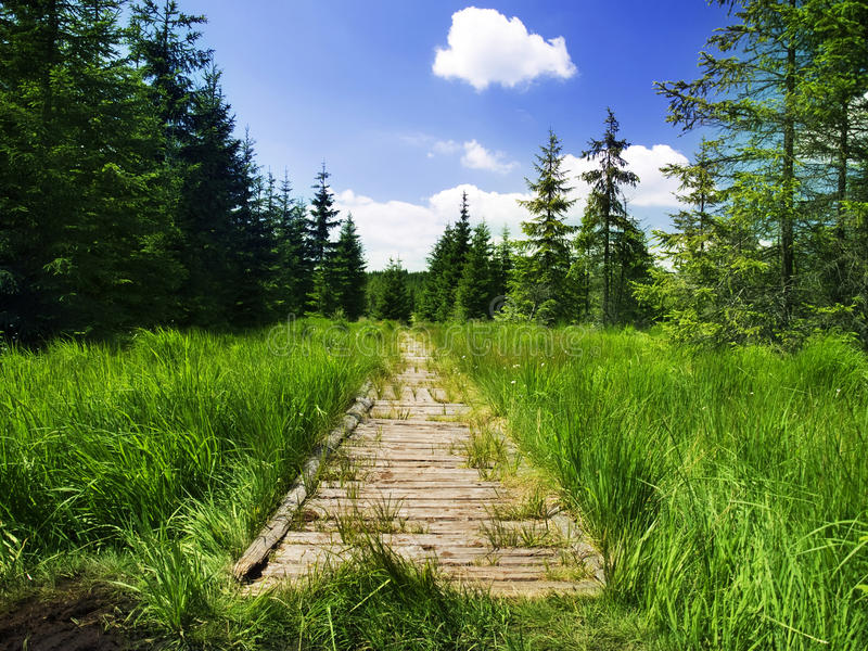 Countryside walk royalty free stock photography