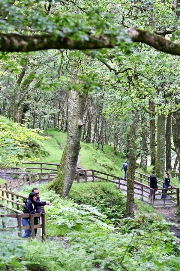Coupé het bewonderen glendalough gebied, Ierland stock foto