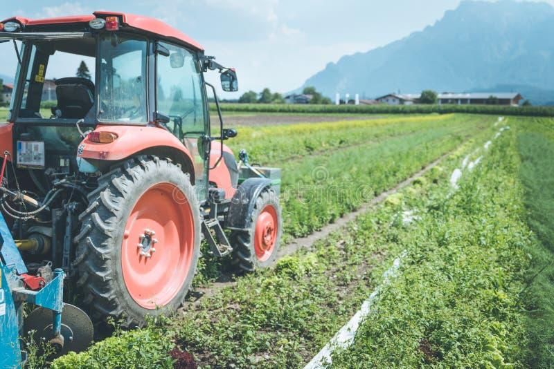 Coup? du tracteur cultivant le champ au printemps, agriculture photos stock