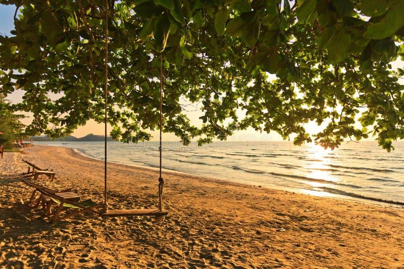 Coup en bois d'oscillation d'un arbre sur une plage et un coucher du soleil images stock
