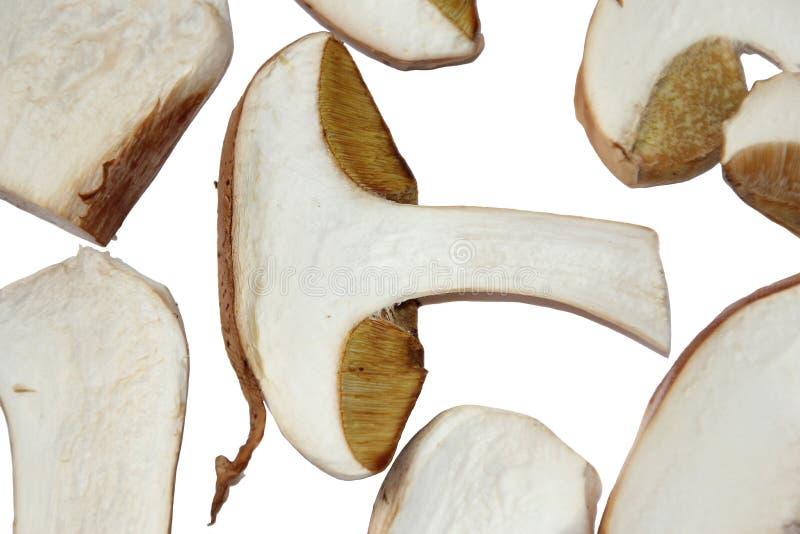 Coupe blanche de champignon de fond blanc sèche par forêt de champignons photos stock