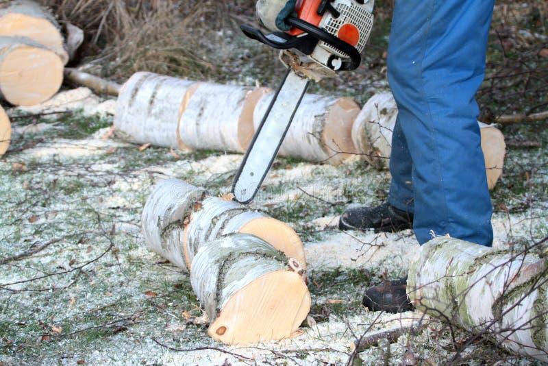 Coupe d'arbre avec la tronçonneuse images stock