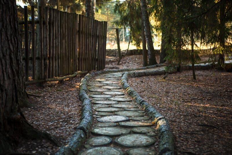 Coupe de texture d'arbre Le tronçon au sol est couvert d'aiguilles et de feuilles de pin photo stock