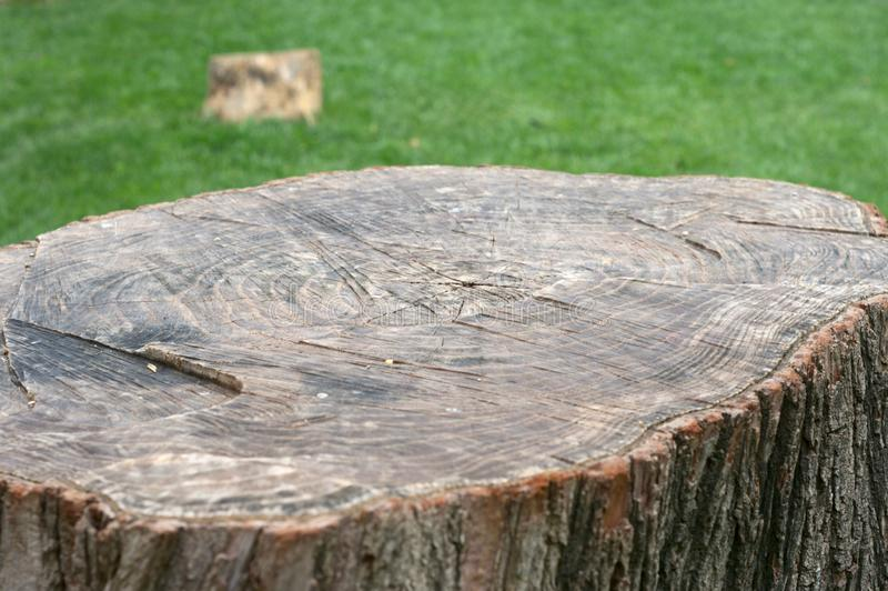 Coupe de tronc d'arbre avec le fond ci-dessus et vert d'air photos libres de droits