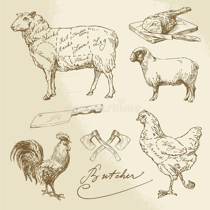 Coupe de viande - agneau, poulet illustration libre de droits