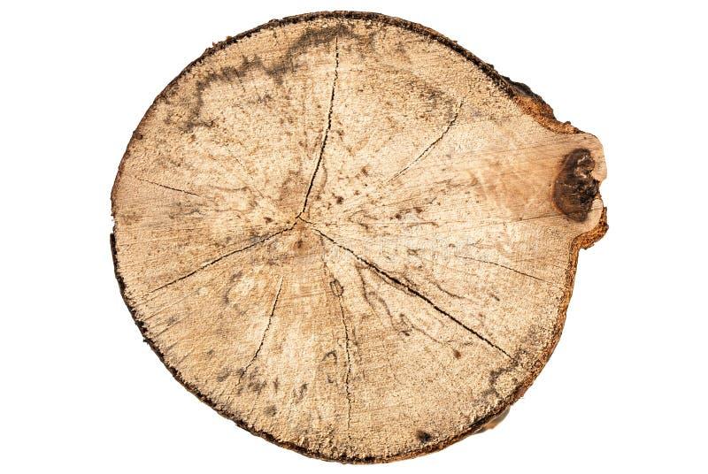 Coupe ronde de tronçon d'arbre de hêtre avec des anneaux d'isolement sur la vue supérieure de forme blanche de fond images stock