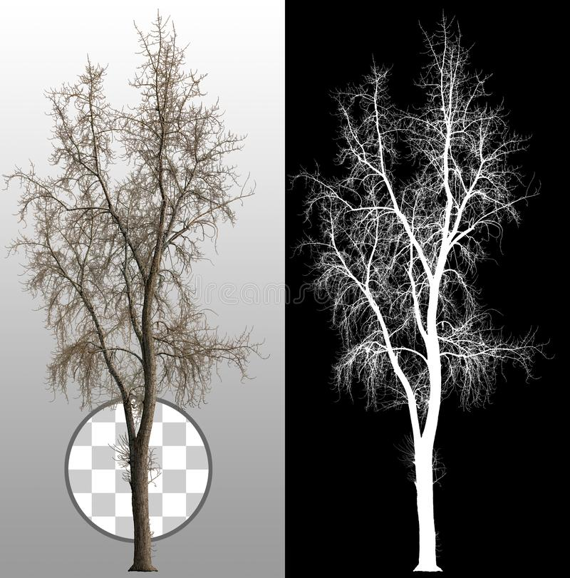 Couper l'arbre mort sans feuilles images libres de droits