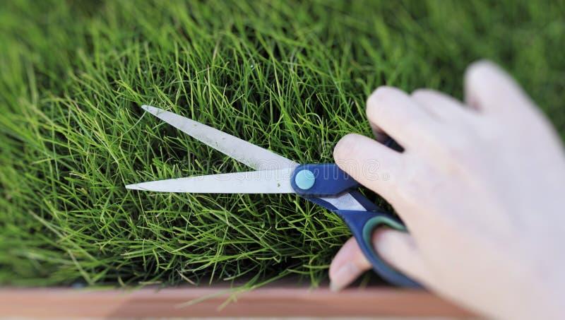 Couper l'herbe fraîche avec des ciseaux photographie stock libre de droits