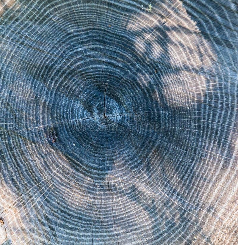 Couper la surface de l'arbre avec l'arrangement de l'anneau image libre de droits