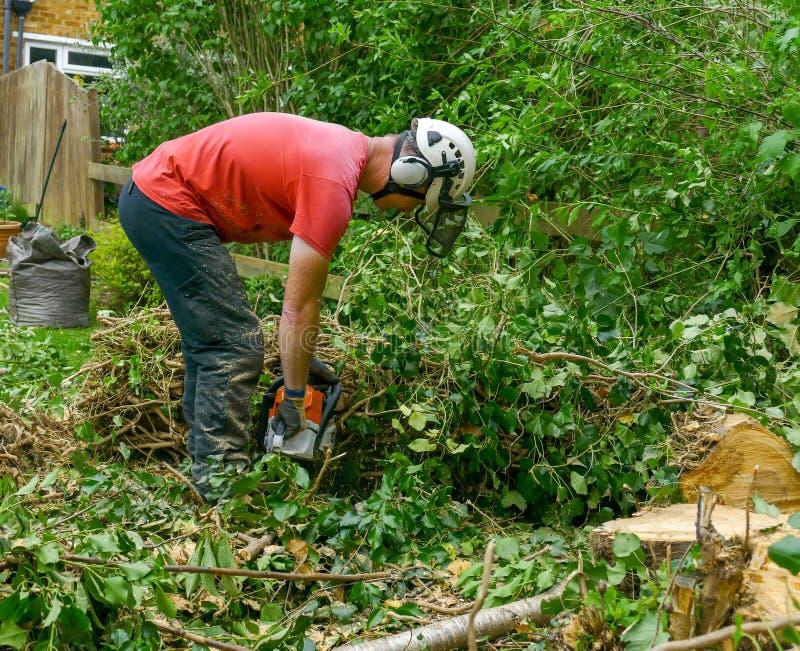 Couper un arbre abattu photo libre de droits