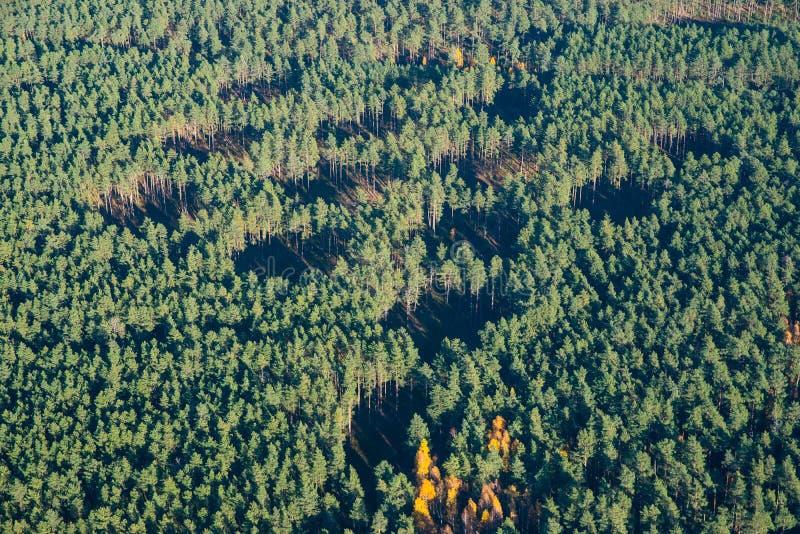 Coupes de forêt d'en haut Trous dans le paysage d'antenne de forêt nn photographie stock