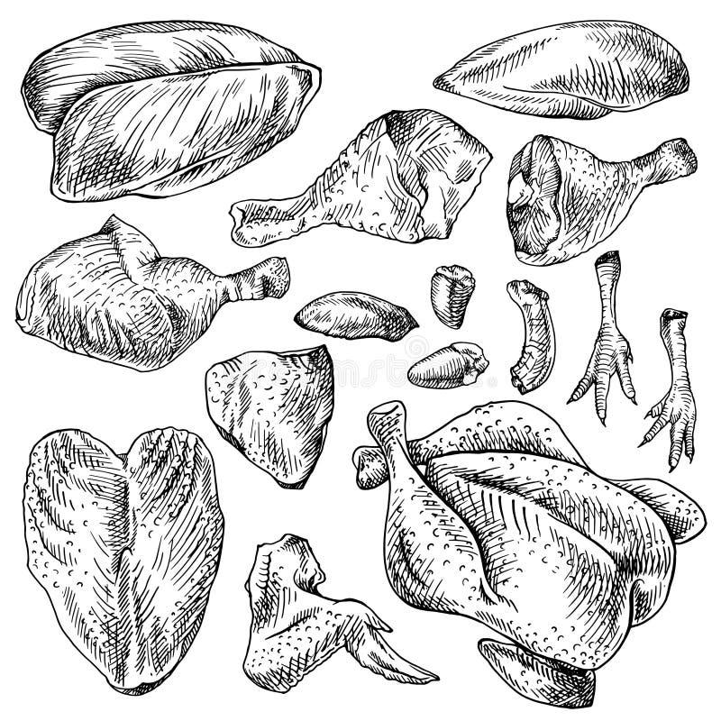 Coupes de poulet, pièces de poule Ensemble domestique de viande d'oiseau illustration de vecteur