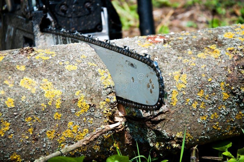 Coupes de tronçonneuse une ouverture un fond d'herbe verte Dents pointues photos stock