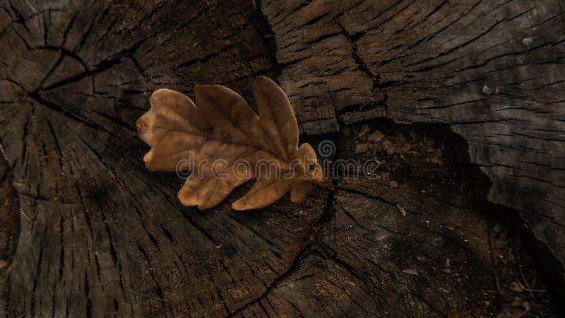 Coupez d'un arbre de tronçon dans la forêt photographie stock libre de droits
