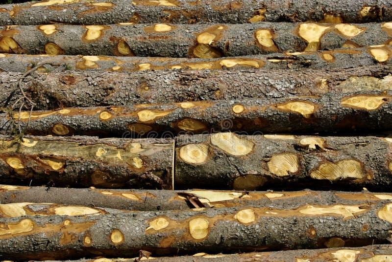 Coupez en bois photographie stock
