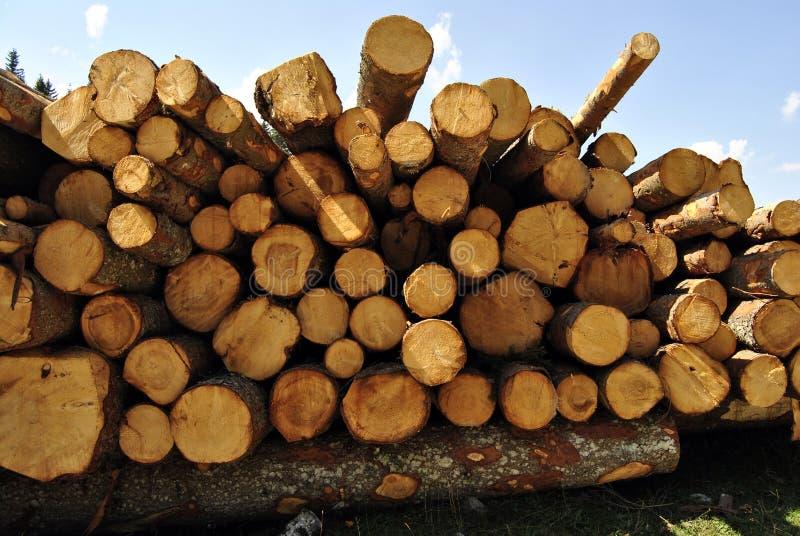 Coupez en bois photos libres de droits