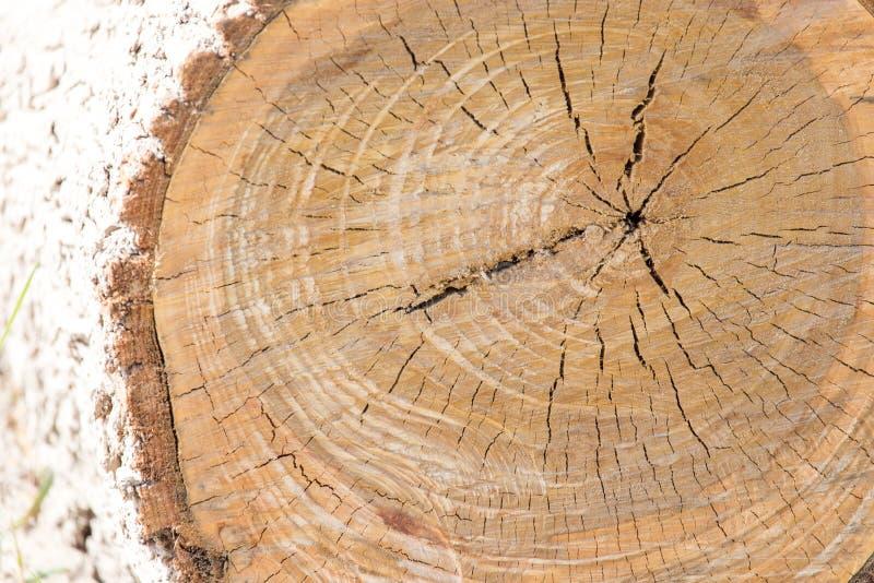 Coupez la couronne d'arbre image libre de droits