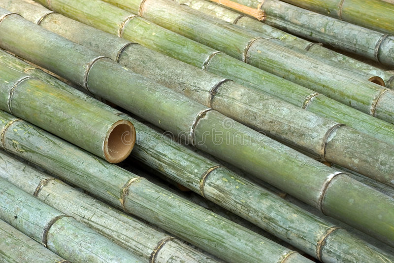 Coupez le bambou image stock