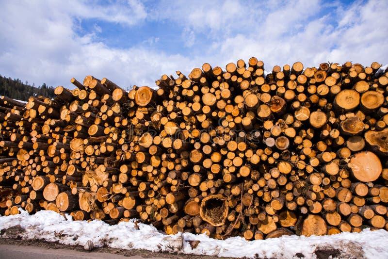 Coupez le bois de construction d'arbre Fond d'image d'un arbre de coupe Pile des rondins en bois Fond en bois naturel photos stock
