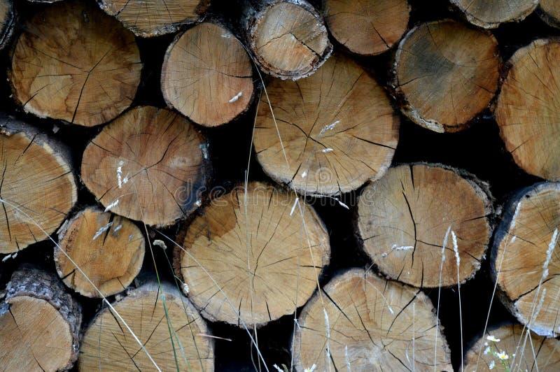 Coupez les arbres Préparation pour l'hiver images stock