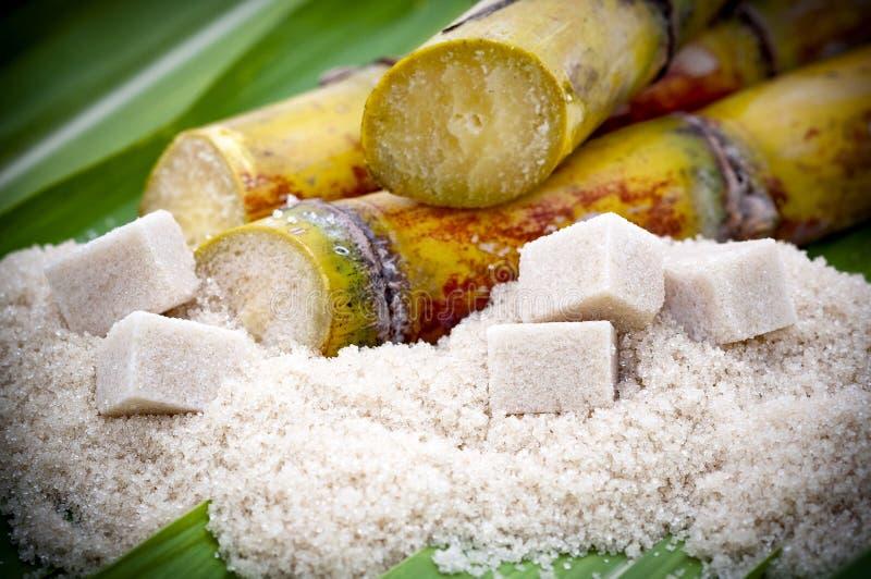 Coupez les centrales de canne à sucre photos libres de droits