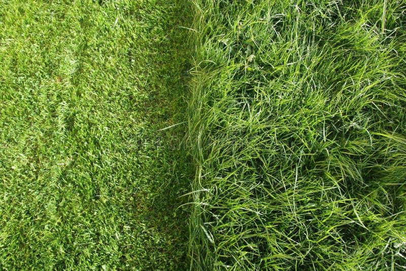 coupez partiellement la pelouse d'herbe images stock