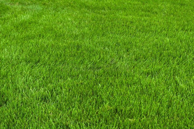 Coupez soigné l'herbe photo stock