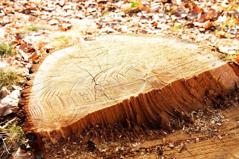 Coupez un arbre image libre de droits