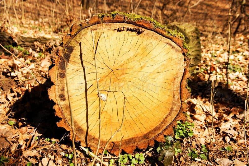 Coupez un arbre images stock