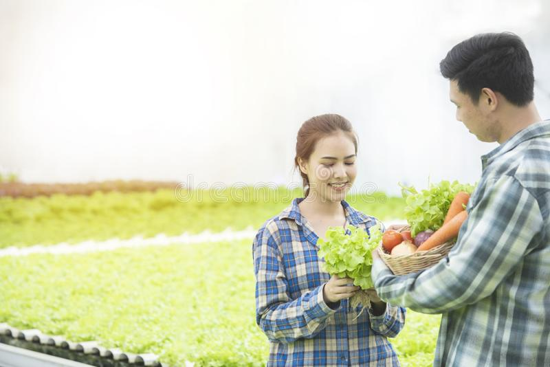 Couple asian farmer owner collect green oak hydroponic vegetable. Owner hydroponic organic farm,Small business entrepreneur and. Organic vegetable farm and stock photography