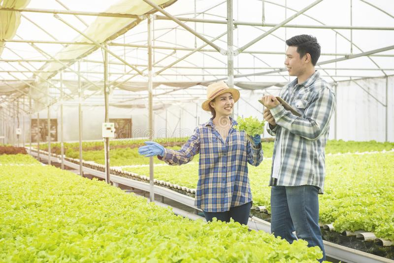 Couple asian farmer owner using touchpad green oak hydroponic vegetable. Owner hydroponic organic farm using touch pad for check. Green vegetable quality in the stock image