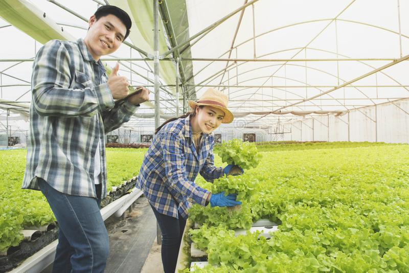 Couple asian farmer owner using touchpad green oak hydroponic vegetable. Owner hydroponic organic farm using touch pad for check. Green vegetable quality in the royalty free stock image