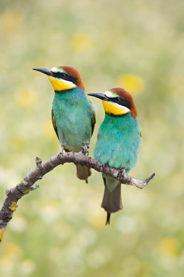 Couple of birds stock photo